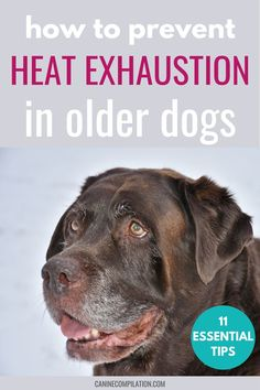 Summer can be tough for any dog, but we need to take extra special care of our older dogs in hot weather. Get 11 essential summer care tips to keep your older dog happy and healthy!
