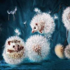 #лето #одуванчики #еж #белый #summer #dandelions #hedgehog #white