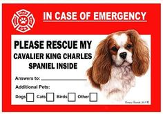 Cavalier King Charles Spaniel Dog Emergency Window Cling King Charles Spaniel, Cavalier King Charles, Spaniel Dog, Spaniels, Pet Names, Pet Gifts, Dog Care, Dog Owners, Funny Dogs