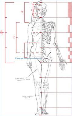 John Hartman Illustration. Artistic Anatomy. Dr. Paul Richer Skeletal Study. 7…