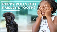 Puppy Ash Pulls Out Paisley's Tooth?! | Behind the Braids Family Vlog Ep.36 In this week's #BehindTheBraids vlog Paisley pulls out her first tooth by tying one end of a string to her tooth and the other end around our puppy. Does it work? You be the judge! Kamri goes to church camp in San Antonio and has a great time! She got to do a ton of fun stuff like room with friends decorate her room dance eat junk food and make tons of new friends! Brooklyn and Bailey go on 2 campus tours with Mindy…
