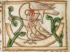 Il pellicano che nutre col proprio sangue la nidiata: uno degli equivoci etologici dei Bestiari medievali. Impiegato come simbolo anche nell'alchimia, l'ars regia. (Bird detail from medieval illuminated manuscript, British Library Harley MS 3244, 1236-c 1250, f54v)