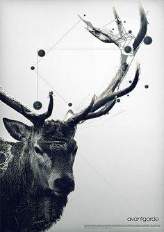 Constelación*
