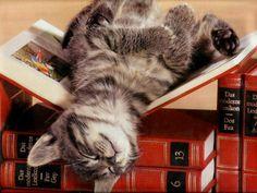 Un gato lector