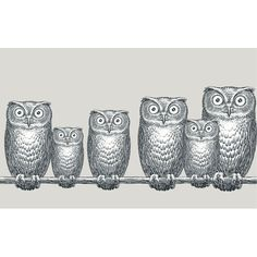Owl wallpaper by Cole & Son