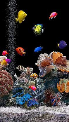 Beautiful fish tank!  Want this!!