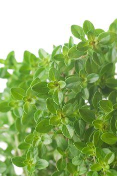 Herb flavored vinegar