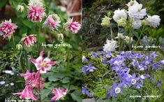 植えっぱなしOKの多年草(宿根草) 総集編 | キヨミのガーデニングブログ 長澤淨美のアメブロオフィシャルブログPowered by Ameba Summer Garden, Backyard Landscaping, Landscape, Green, Flowers, Plants, Image, Gardening, Backyard Landscape Design