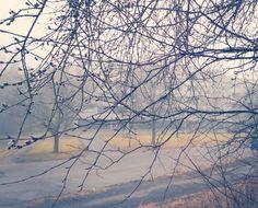 Sumua ja pajunkissoja #Ispoinen #Turku #sumu