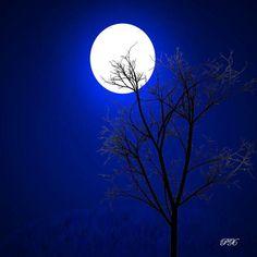 Lua cheia noite escura - http://www.facebook.com/photo.php?fbid=145544222255129=a.139377969538421.32014.136309929845225=1=nf - 538933_145544222255129_292220282_n.jpg (720×720)