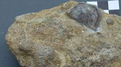 Shropshire Silurian finds