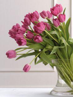 van die gewone Hollandse Tulpen, die alle kanten uitgroeien! Love it!