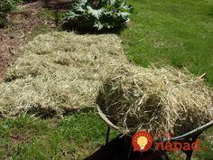 Wheelbarrow, Garden Tools, Gardening, Belle, Yard Tools, Lawn And Garden, Horticulture