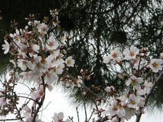 week end di primavera 25 aprile e 1 maggio  http://mediterranews.org/2013/04/week-end-tra-25-aprile-e-1-maggio-qualche-idea-di-primavera/