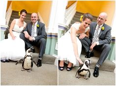 No Zoo wedding is complete without a penguin!