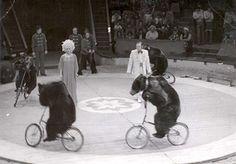 Berousek Circus - The Greatest Show in Prague Historical Photos, Vintage Images, Prague, Entertaining, Past, Historical Pictures, Vintage Pictures, History Photos, Funny