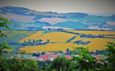 Italy, Marche, Ancona - field of sunflowers by Gianni Del Bufalo