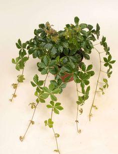 Paludarium, Planters, Herbs, Plants, Books, Herb, Plant, Window Boxes, Flower Pots
