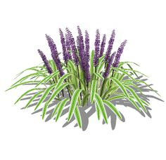 Landscape Specific Plugins, Textures, and Components for SketchUp Liriope Muscari, Photoshop, North America, Flora, Planters, Herbs, Clip Art, Texture, Landscape