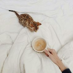 Coffee kitty ☆ Join our Pinterest Fam: @SkinnyMeTea (140k+) ☆ Oh, also use our code 'Pinterest10' for 10% off your next teatox