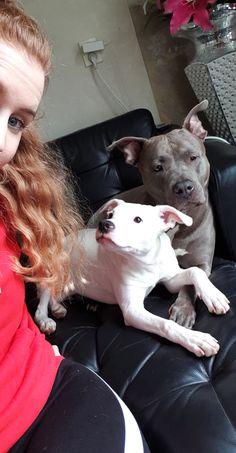 De hondjes en ik💛 Pitbulls, Dogs, Animals, Animais, Animales, Animaux, Pet Dogs, Pit Bull Dogs, Doggies