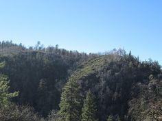 Trees on the hillside.