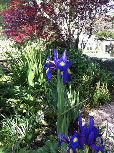 Southern Highlands Open Garden Weekend 27-28 April - Georgica Pond