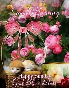 Good Morning beautiful one! God bless you and have a day filled with love and happiness. Good Morning Happy Sunday, Good Morning Cards, Happy Sunday Quotes, New Every Morning, Friday Saturday Sunday, Sunday Prayer, Blessed Sunday, Sunday Greetings, Evening Quotes