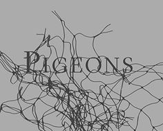 Stephen Gill : Pigeons : Deluxe Limited Edition