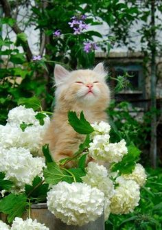Kitten in the flowers