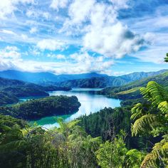 Queen Charlotte Track - one of New Zealand's leading hiking tracks. It is located in the Marlborough Sounds.