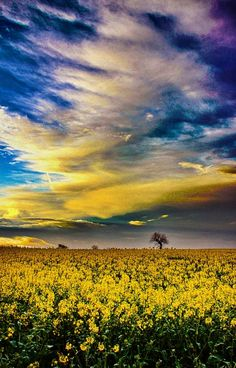 Blue and yellow@Natures Colors