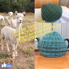 Our proceeded into yarn and then knitted into a Tea Cosy - # Alpacas 2017 Cosy, Crochet Hats, Alpacas, Crafts, Tea, Knitting Hats, Manualidades, Handmade Crafts, Craft