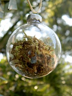 Rustic Sphagnum Moss Clear Glass Ball by CharlestonCharms on Etsy, $10.00