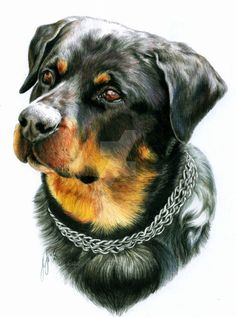 DeviantArt: More Collections Like Cat Portrait 2 by EsthervanHulsen Raza Rottweiler, Rottweiler Love, Pretty Animals, Animals Beautiful, Animal Paintings, Animal Drawings, Dog Drawing Tutorial, Majestic Animals, Dog Art