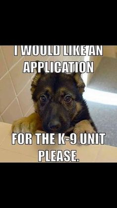 I would like an application for the unit please. Source by tabouncess dog dog memes dog videos videos wallpaper dog memes dog quotes dogs dogs pictures dogs videos puppies puppy video Funny Animal Jokes, Funny Dog Memes, Cute Funny Animals, Animal Memes, Cat Memes, Funniest Animals, Cute Funny Dogs, Funny Pugs, Shepherd Puppies