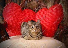 Cute Tabby Kitty Daisy Cat Kitten & Hearts Sweetheart by JWPhoto