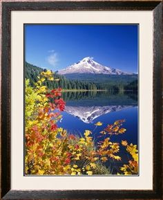 Autumn Leaves Growing Near Mount Hood and Trillium Lake-Craig Tuttle-Photographic Print Landscape Photography, Nature Photography, Photography Tips, Scenic Photography, Aerial Photography, Night Photography, Portrait Photography, Wedding Photography, Photography Courses