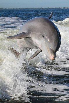 Animais marinhos #marine #animals #golfinho