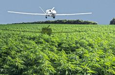 The Government Bought, Can't Use Weed-Tracking Drones