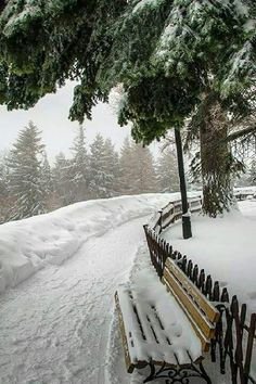 ideas nature paysage hiver for 2019 Winter Forest, Winter Szenen, Winter Love, Winter Magic, Winter Walk, Winter Holidays, Winter White, All Nature, Snowy Day