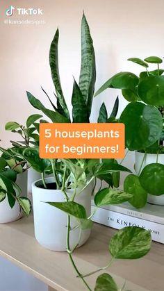 Indoor Shade Plants, Best Indoor Plants, Best Plants, Indoor House Plants, Feng Shui Indoor Plants, Indoor Plant Decor, Indoor Plants Names, Benefits Of Indoor Plants, Easy Care Indoor Plants