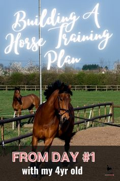 Horse Training Tips, Training Schedule, Training Plan, Lunging Horse, Jobs For Teens, Natural Horsemanship, Training Exercises, Barrel Horse, Show Jumping