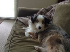 Kora chillin on the couch