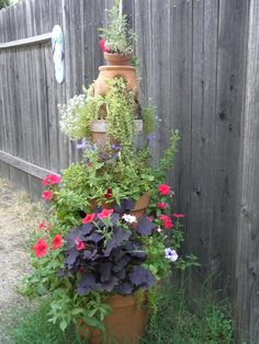 Mid Summer Growth,  Rancho Cordova CA Rancho Cordova, Backyard Projects, Plants, Summer, Backyard Designs, Summer Time, Plant, Planets