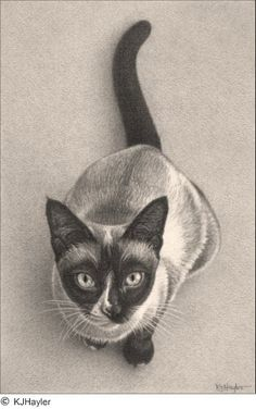 'Sitting Pretty' Fine Art Pencil Drawings www.drawntonature.co.uk by kjhayler, via Flickr