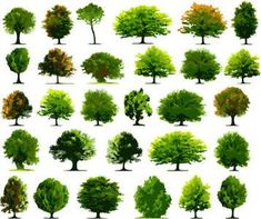 Free for Photoshop: Trees Vectors