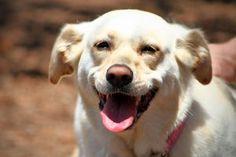 Cani Divertenti/Funny Dogs | Sognando i Sogni...