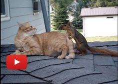 Cat And Squirrel Play Together