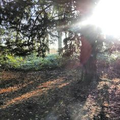 Woodlands, Coombe Abbey country park